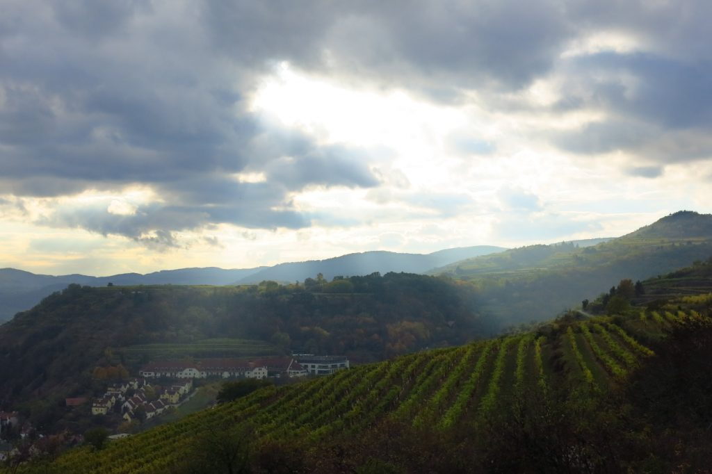 Vineyard in Krems an der Donau, Austria