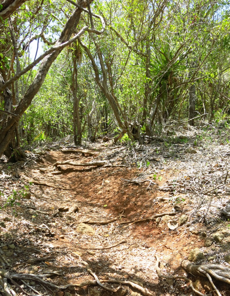 Lookout Trail at Nelsons Dockyard National Park