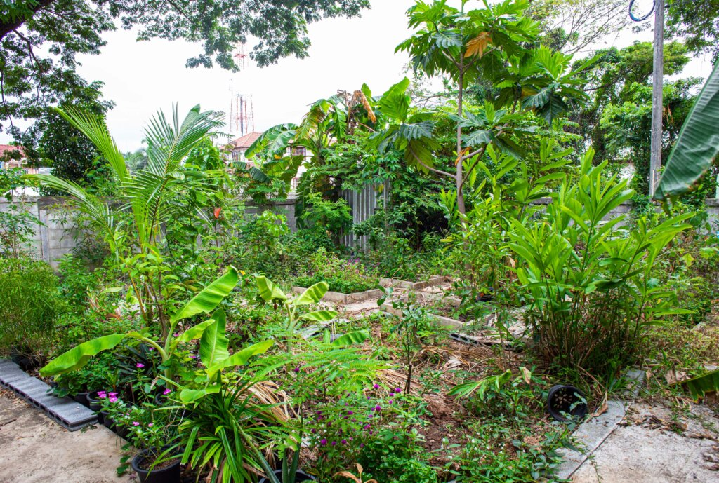 Darling's Big Garden